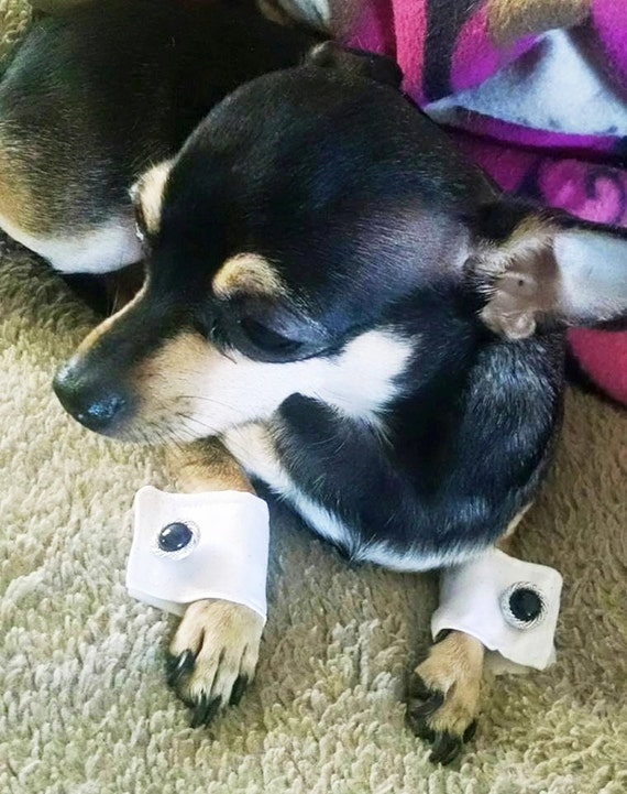 Custom dog cuffs for your wedding pup. Dog cuffs bridal wear Instagram Twitter photo prop