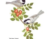 Black-Capped Chickadee and Rose Hips