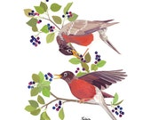 Robins in Juneberry