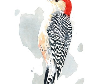 Red-bellied Woodpecker Watercolor Painting, 8x10 Bird Print