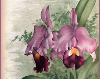 antique french botanical print tropical rainforest flower pink orchid illustration digital download