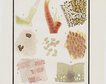 Antique print 1882 Antique MICROSCOPE print, Applied to the study of plants. hair nettle, algae, pollen grains, wood,