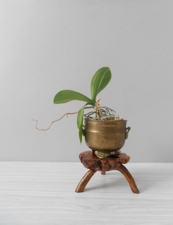 Unique Vintage Small Driftwood Table Plant Stand Stool