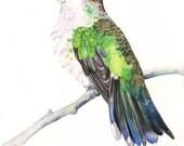 Hummingbird print of watercolour painting HB3415 - A4 size medium print wall art print - bird art - art print - wildlife print