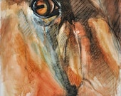 Horse Look XV - black chalk, pastels and watercolor Horse Eye Drawing