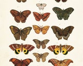 Vintage Butterfly Series 1 Print No. 2 - Giclee Canvas Art Print - Natural History Art - Wall Decor -Multiple Sizes Starting at USD 15.00+