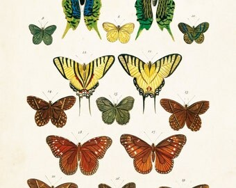 Vintage Butterfly Series Plate No. 3 - Giclee Canvas Art Print - Print - Poster - Canvas Wall Hanging - Natural History Art - Wall Decor