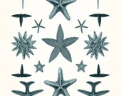 Vintage Teal Asteridia Starfish Collage No.2 - Giclee Canvas Art Print - Nautical Art - Beach Decor, Coastal Decor, Wall Art, Wall Hanging