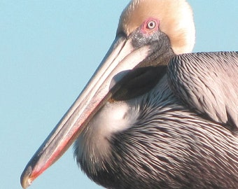 Pelican Photograph Bird Photography Beach Decor 8x10 Pelican Art Print