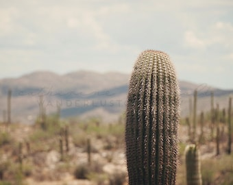 Lone Saguaro - Photographic Print - desert, native, southwest, american, Arizona, blue, wild, wanderlust, travel, brown, mountains