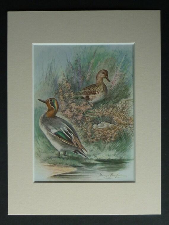 Vintage Teal Wall Decor : S vintage print of teal ducks available framed nest art