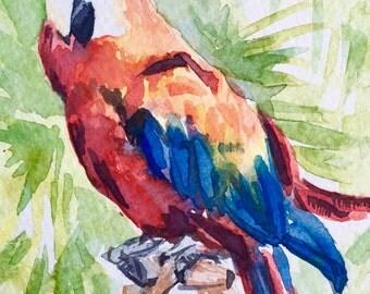 """Watercolor birds, Watercolor painting original, Parrot, Garden, Nature, Birds, wildlife - 5""""x5"""" Watercolor on paper"""
