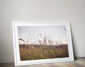 tall grass photography // vintage photo // wall art