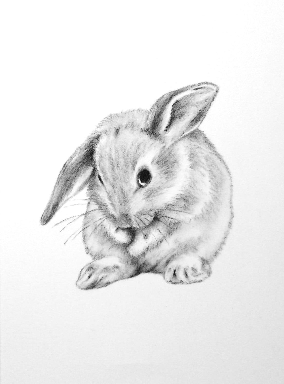 Bunny Art ORIGINAL 5x7 Charcoal Lop Eared Bunny