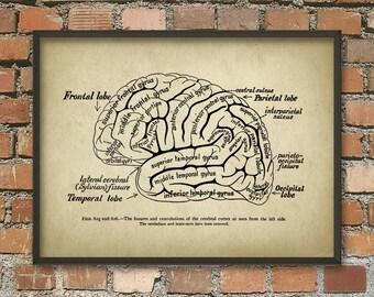 Brain Anatomy Print - Cognitive - Computational - Neuroscience - Neurolinguistics Wall Art Poster - Human Brain Anatomy Science Poster