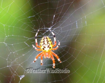 Fine Art Spider Photography   Marbled Orb Weaver   Web   Arachnid Photo   Boys Room Decor   Yellow Orange Black Spider Insect   Color Print