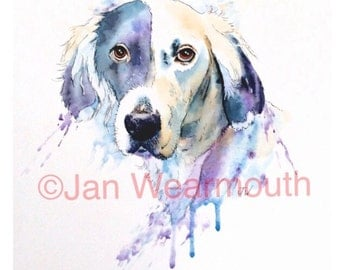 Custom dog portrait, custom pet portrait in Watercolour, pen and ink from your photographs. Original art painting. English Setter. UK seller