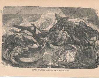 1887 Crabs Antique Print