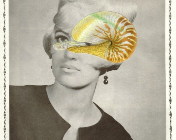 Nautilus Shell Art, Seashell Artwork, Strange Collage