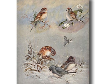 "Bird Decor, Four Seasons Art (Country Cottage Decor, 1930s Sparrow Bird Art Print) --- ""Sparrows & Junco"" No. 71"