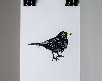 Print of a common blackbird 20x30 cm