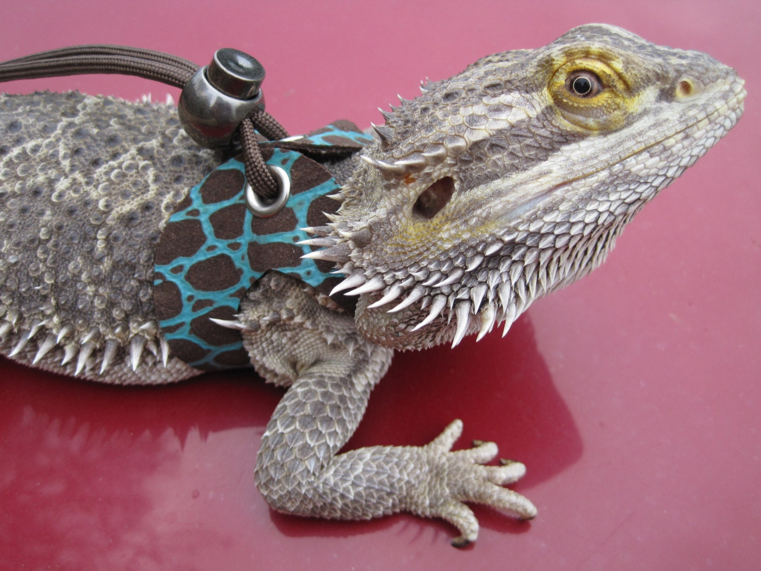 Unique Lizard Crochet Pattern Adornment - Sewing Pattern for Wedding ...