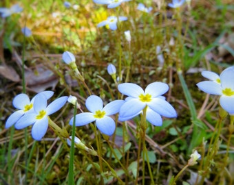 Flowers of Spring, Fine art nature photography, Picture Springtime,
