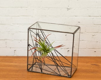 Square Air Plant Cat's Cradle