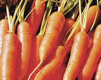 3,000 Carrot Seeds Little Finger Carrots garden seeds