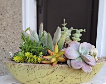 Succulent planter/ Succulent Art/ concrete planter/ indoor planter/outdoor planter/succulent centerpiece/customizable/color choice
