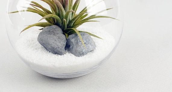 Tillandsia Luft Pflanzen Terrarium Bausatz DIY Set mit