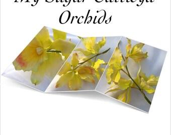 Cattleya Sugar Orchids