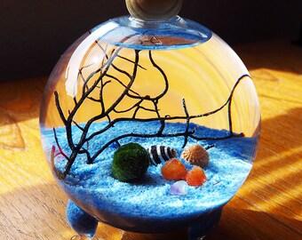 "Marimo Terrarium / Aquatic Living Moss Ball / Home Decor / Blue Sand / 4"" Bubble Ball Glass Vase"