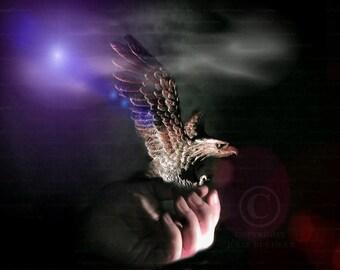 Digital Art: Eagle Flare, Bald Eagle Statue, Animal Art, Wall Decor photo, Fine Art Photography Print [blk] [prp]