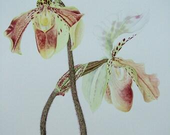 Original Watercolour of a Slipper Orchid. Unframed.
