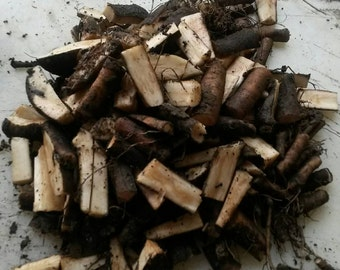 Bocking 14 Russian comfrey root cuttings 15 pcs - Sampler