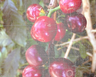 Coffee, Botanical Print