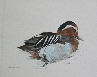 Original Watercolour Bird painting - Garganey Duck - signed by the artist GTH