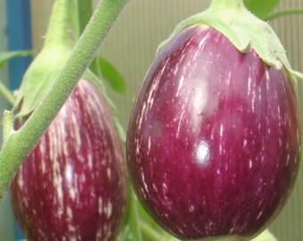 Eggplant seeds Matrosyk Organic Heirloom Vegetable Seed from Ukraine early #715