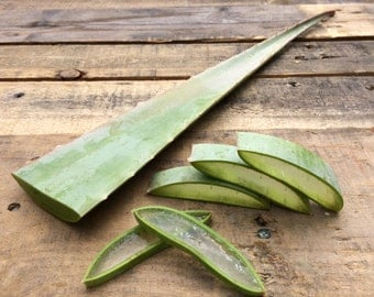 Fresh Organic Aloe Vera Leaves