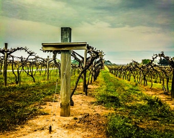 Vineyard,Landscape photography,Wine,Wine Country,Cross,Grapes