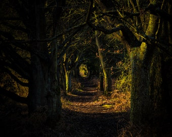 A Dark Path Illuminated. An original fine art photographic Giclée print of the magical golden hours of dawn on a forest path.