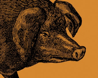 Pop Art Pig, Pig, Orange Wall Art, Poster, Typography, Woodcut Style, Etching Style, Modern, Mid century Modern, Bold Colors - Boris