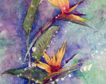 "Watercolor Print ""Bird of Paradise"" Artist B. Feyedelem"