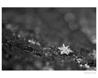 Nature Photography PRINT, Single Snowflake, Wall Art