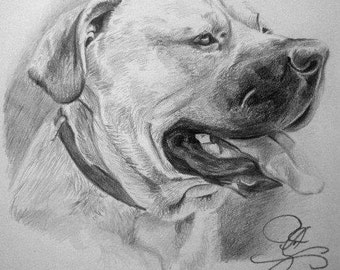 Custom pencil portrait of pet made to order