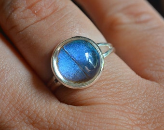 12mm Real Butterfly Wing Ring Blue Morpho Adjustable in Silver