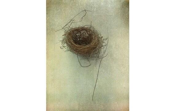Birds Nest Photograph, Still Life Photography, Rustic Wall Decor, Nature Photography, Vintage Inspired Print, Bird Nest Print