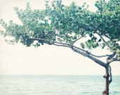 "Beach ocean photography print, pale blue green minimal tree wall art tropical Hawaii decor ""Nouveau Tree"""