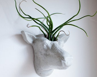 Deer Head Wall Planter, Animal Head, Wall Planter, Concrete, Cement, Air Plant, Succulent